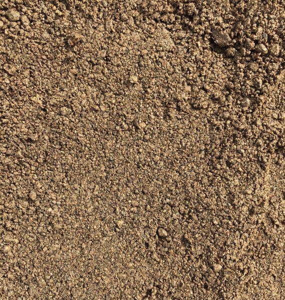 BioSi-WGD-brown